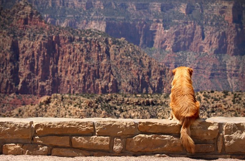 Even dogs enjoy Grand Canyon!
