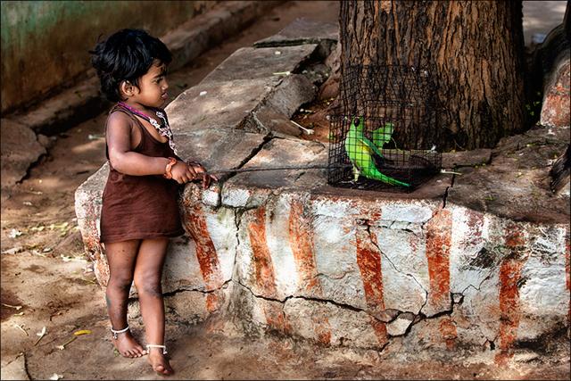 கிளி கொடுமை • Madurai