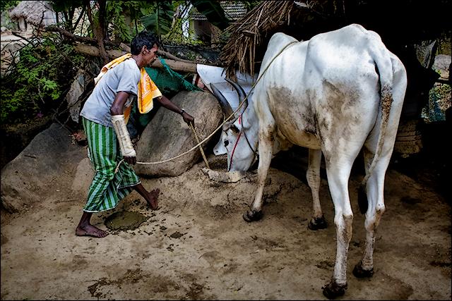 காளை உணவு • Madurai