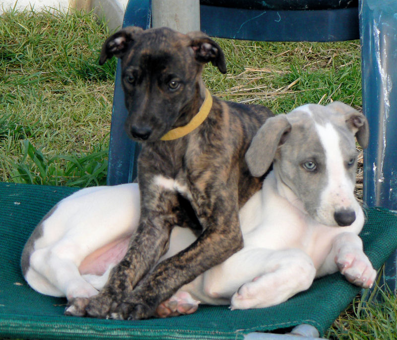 Sani and Cooper
