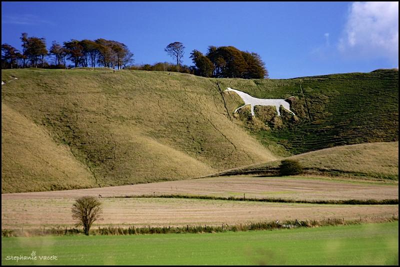 Cherhill Horse