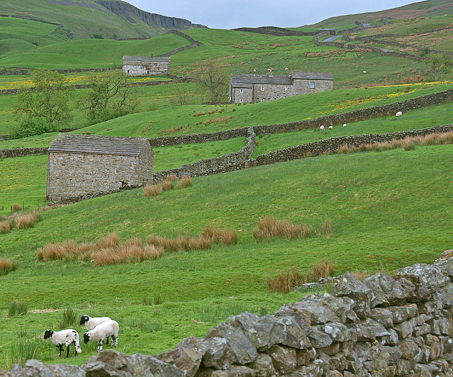 The Yorkshire Dales Somewhere Between Muker And Askrigg