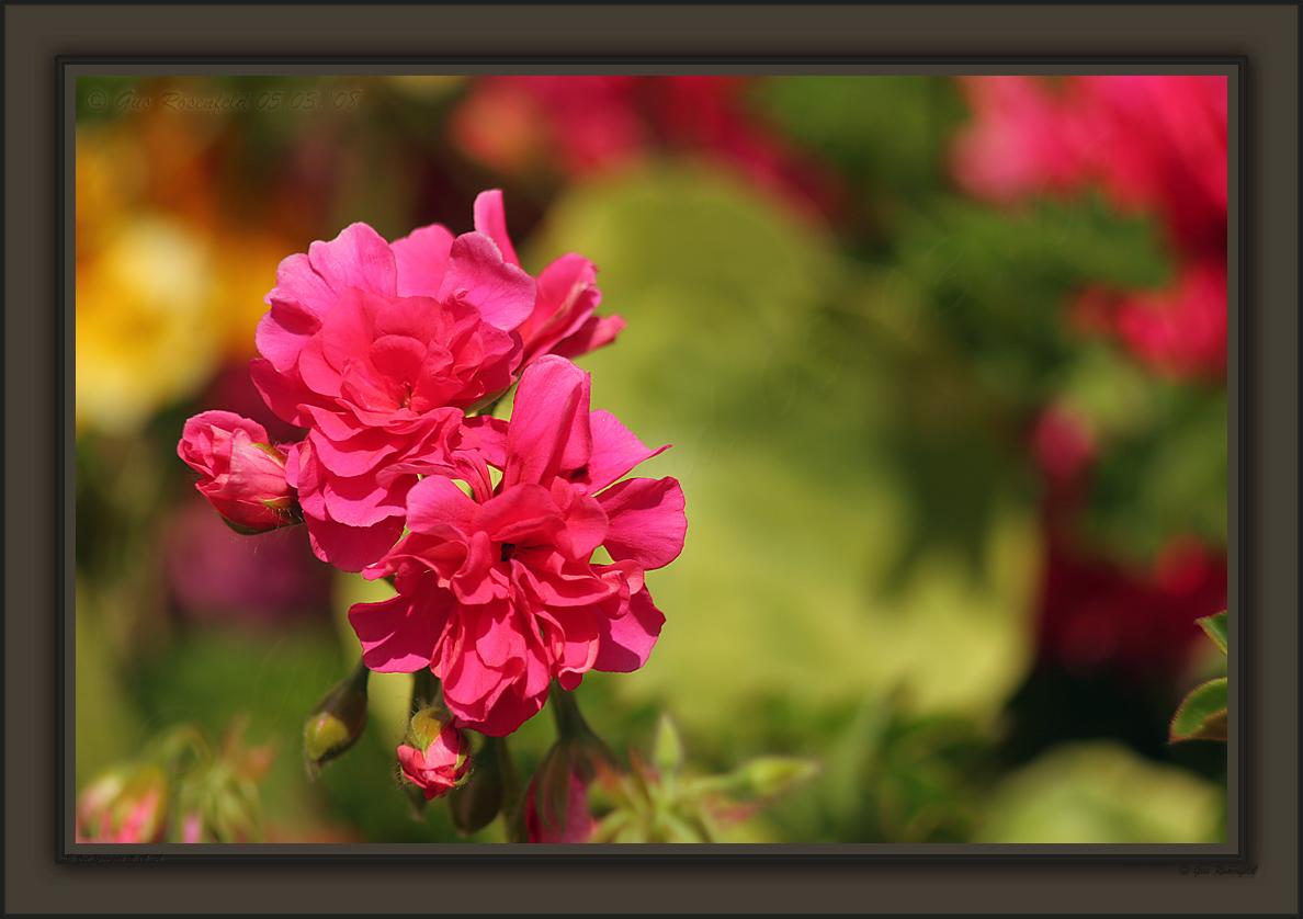 Over The Fence Color Splash Under Intense Spring Sun