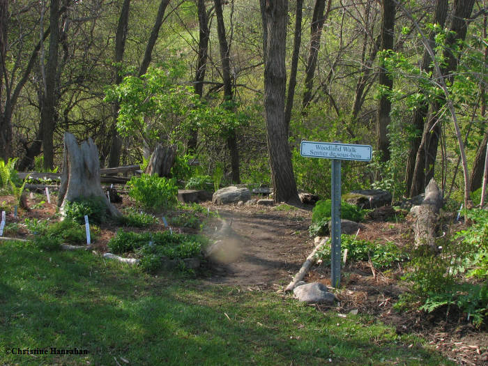Woodland walk-entrance