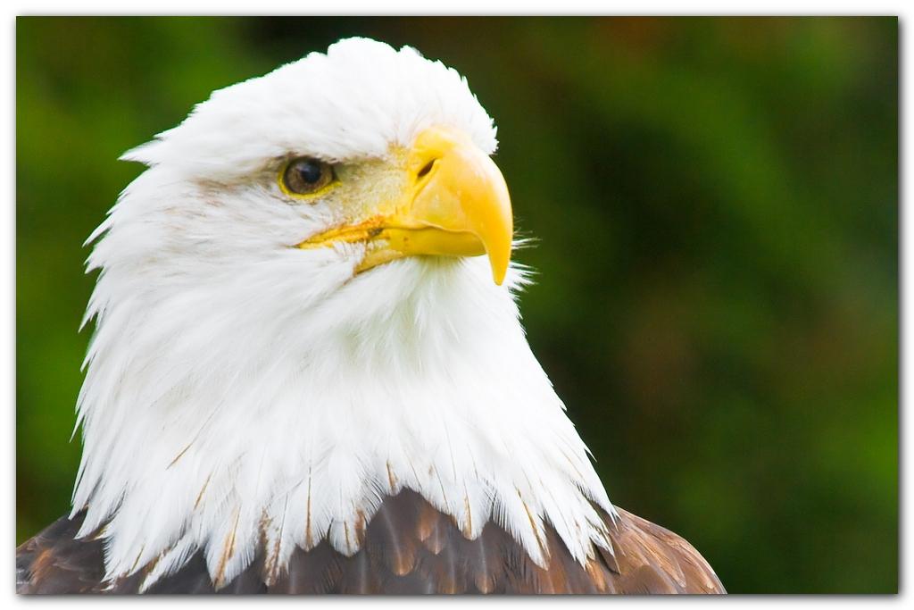 Eagle III