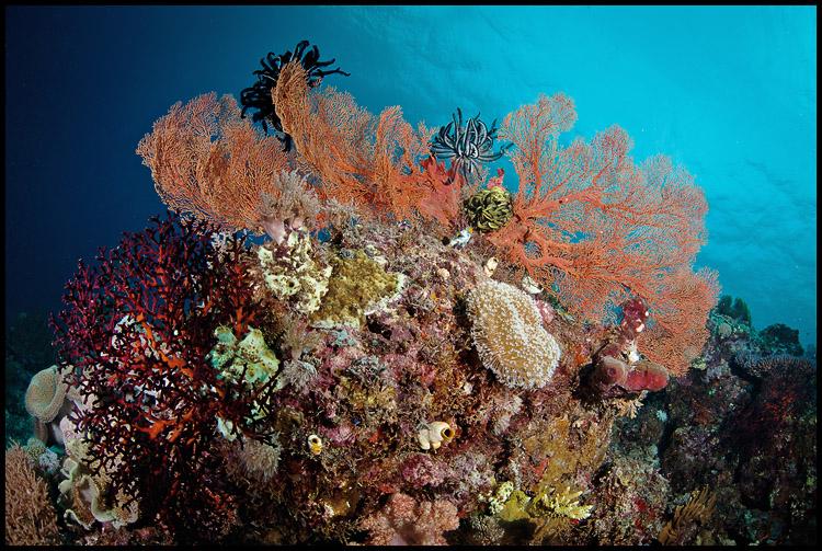 Panga batang reef 2