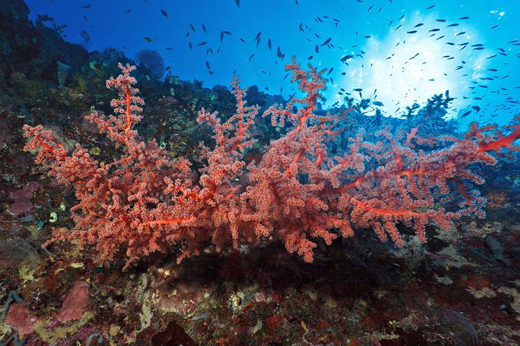 Molana East wall corals