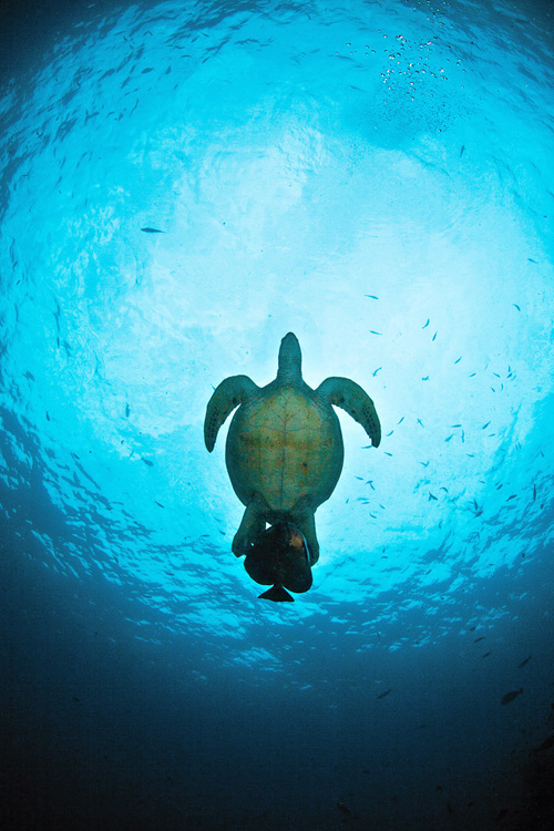 Turtle and close friend