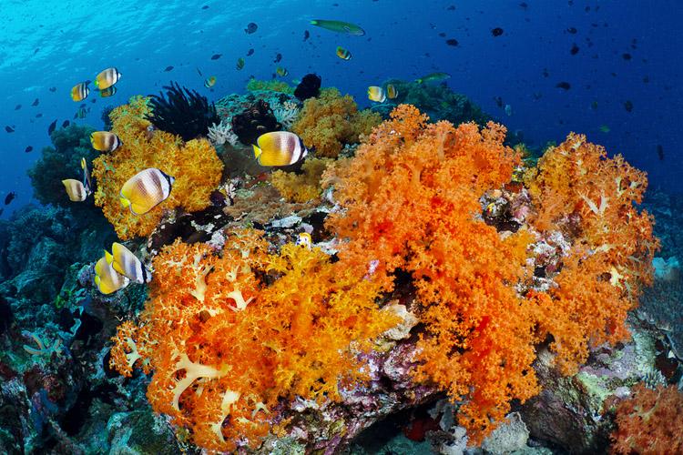 Sahaung 2 reefscape