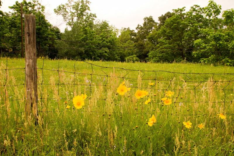 Flowers, Rural East TX, 4-27-2008 (#2)