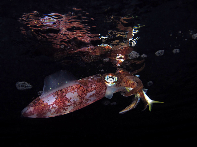 Squid Dinner Reflection