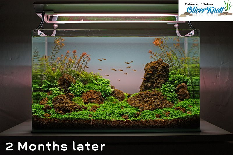 NatureSoil Step by Step Layout Nr.3 by Oliver Knott - 2 months after set up