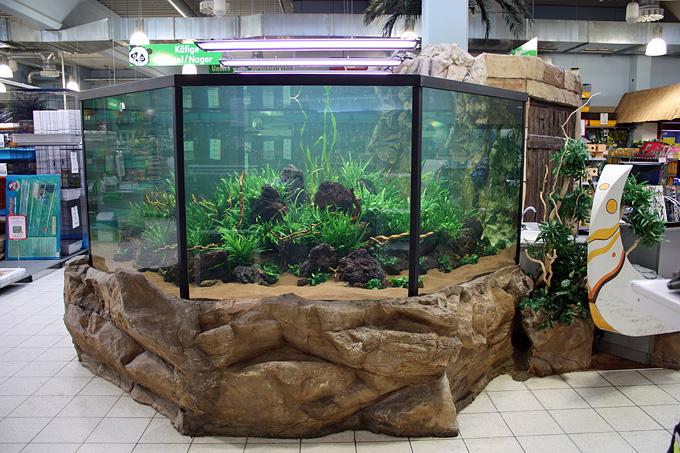 10.000 Liter Arowana tank by Oliver Knott