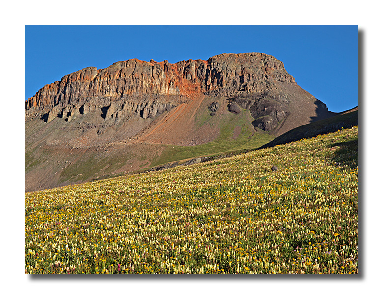 Yellow Mountain with wildflowers