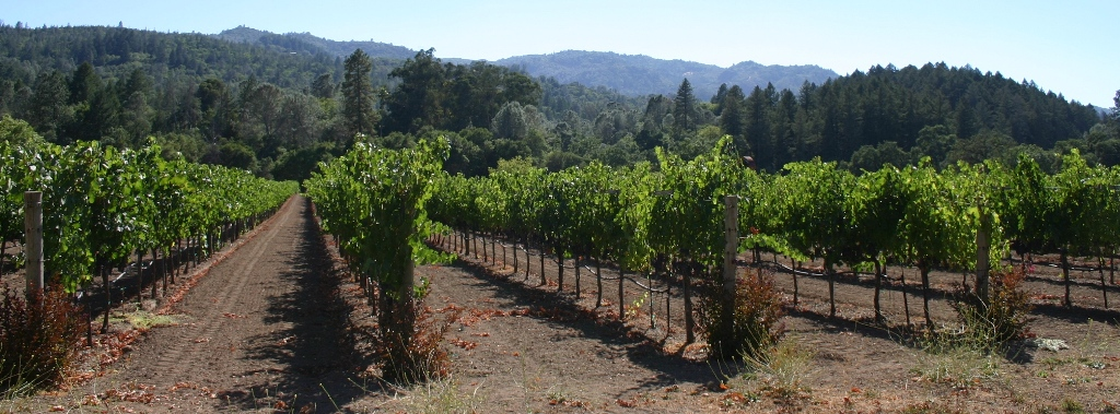 Vineyards...endlessly...