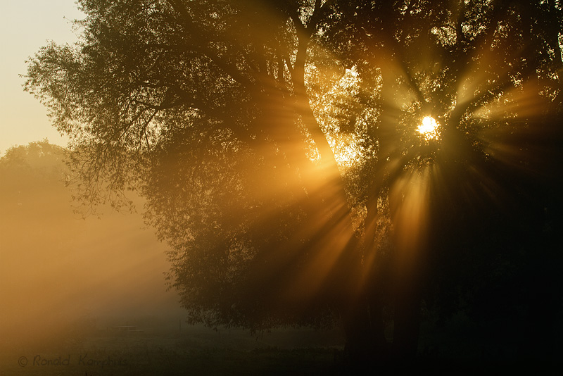 Sunrise De Welp