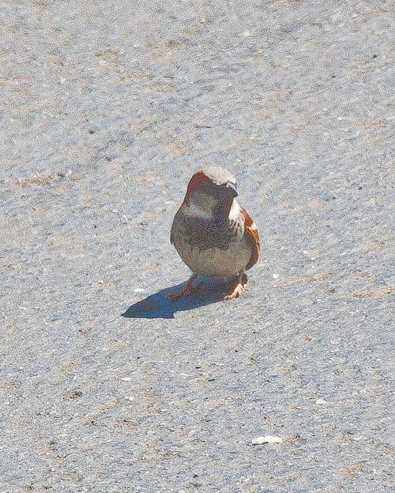 May 12 11 Birds-016.jpg