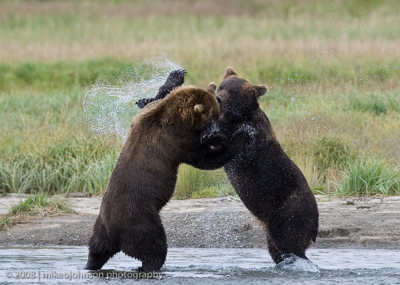 Bears Sparing