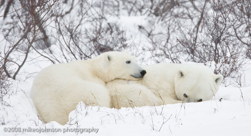 1003Mother and Cub.jpg