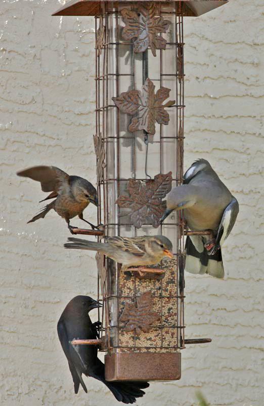 A finch, a cowbird, a sparrow, and a dove go into a bar...