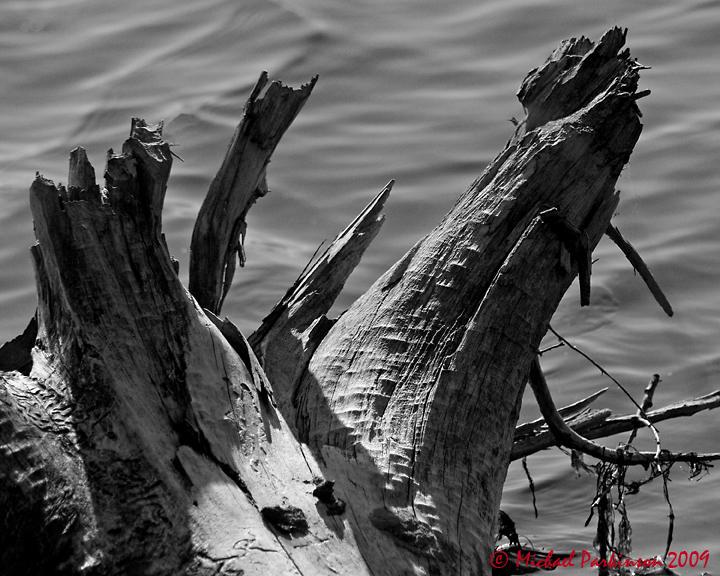 Logs 07041 copy.jpg