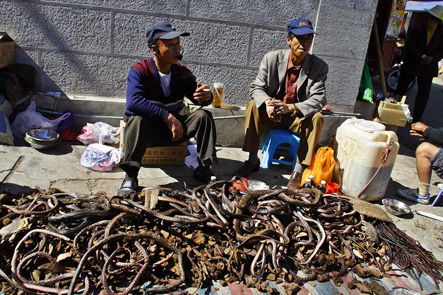 Selling of dried snakes and frogs as medicine in southwest China.