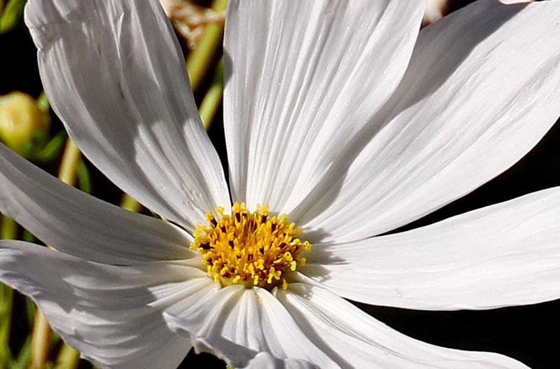 Flower-100-640mm-7D.jpg