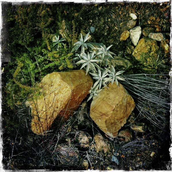 Nature Self-Landscaped
