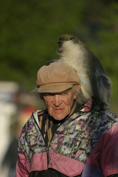 Man and ape.