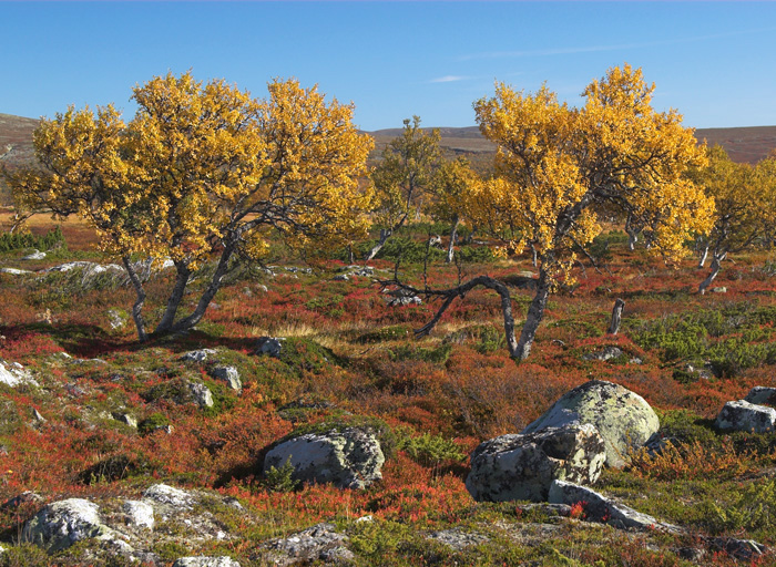 Grövelsjö mountains