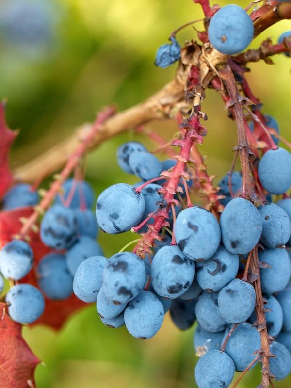 2009-09-21 Berries