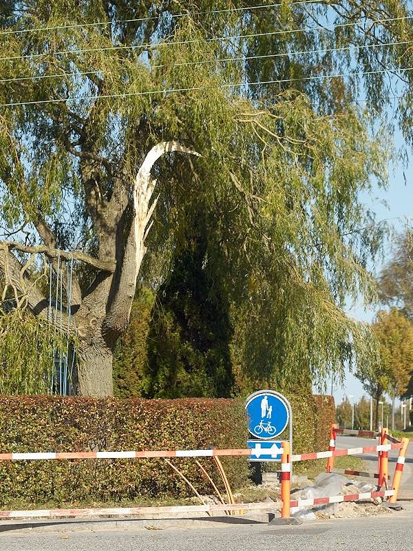 2009-10-06 Big branch missing
