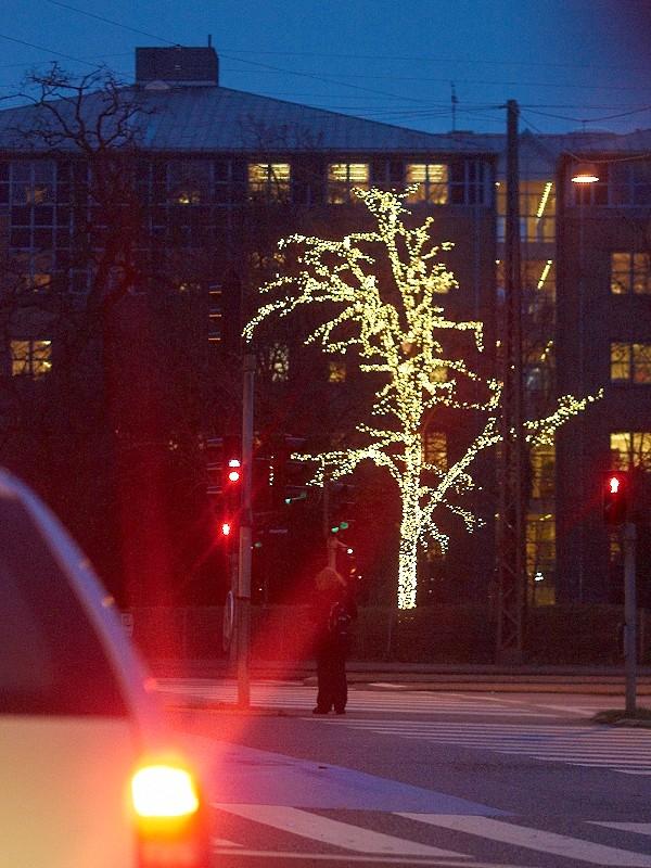 2009-12-03 Lights on tree