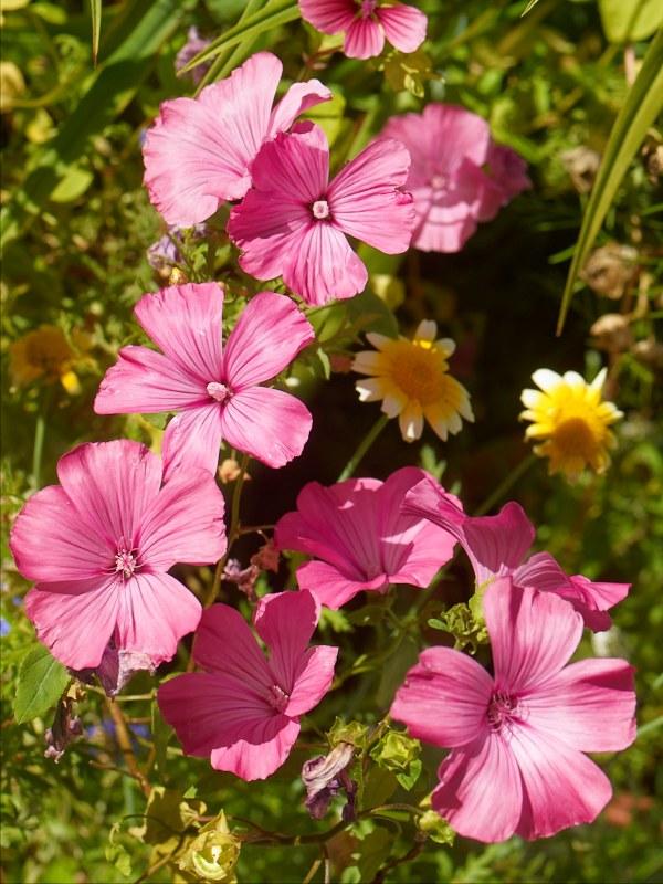 2010-09-04 Flowers