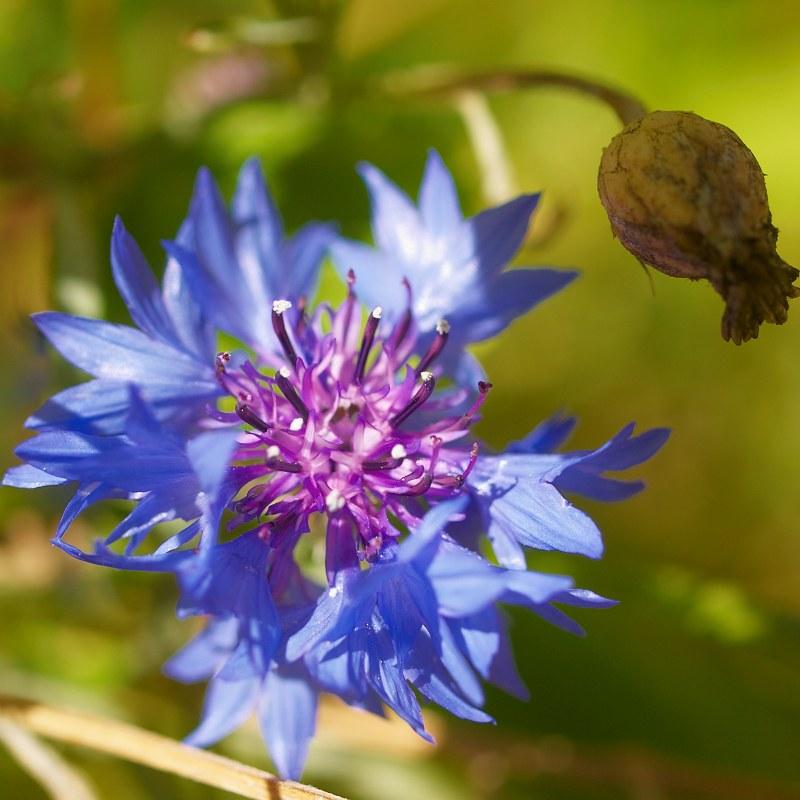 2010-09-05 Flower