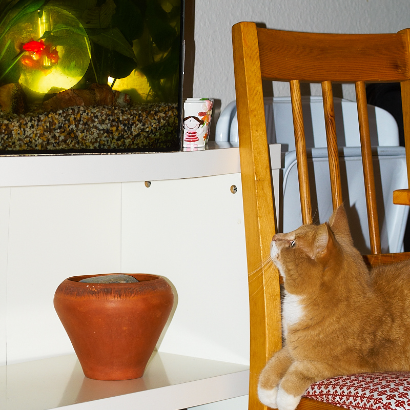 2011-02-13 Cat and fish