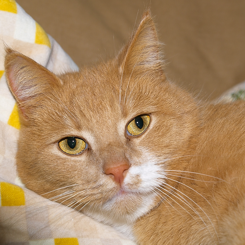 2011-02-14 Red cat
