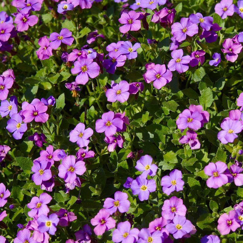 2011-05-11 Flowers