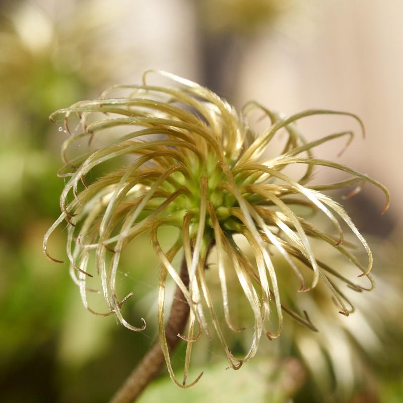 2011-08-08 Flower