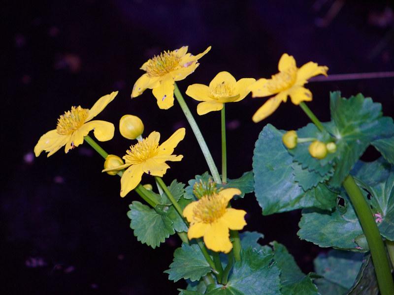 2011-08-22 Flower