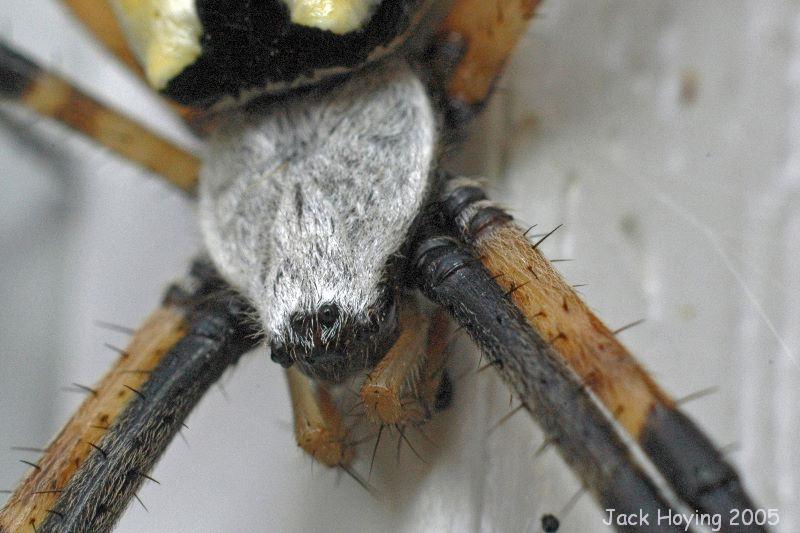 Spider Eyes 1