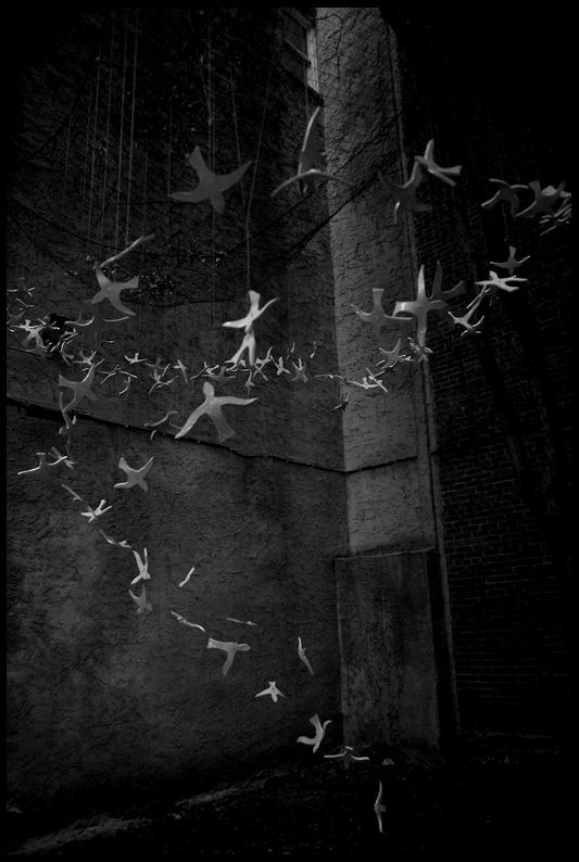 A spiral of birds