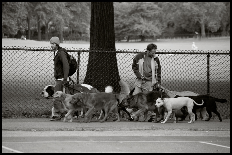 Central Park Pooches
