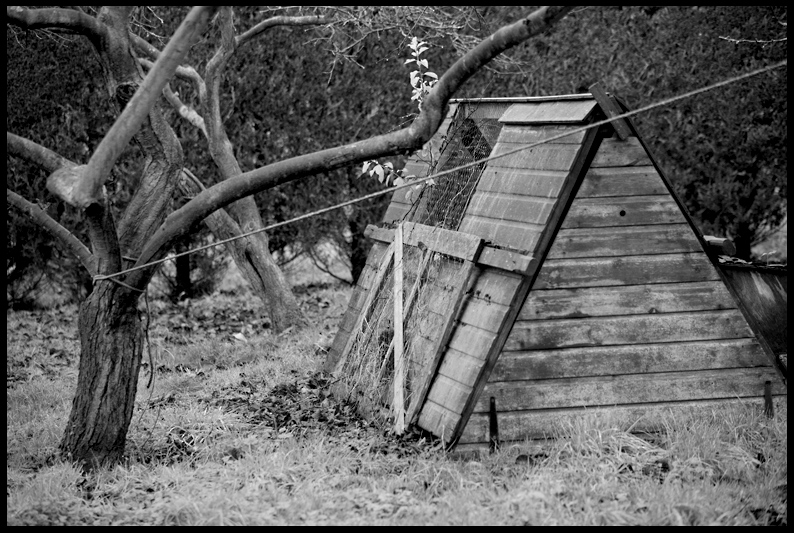 Danby Wiske - The Old Rectory garden
