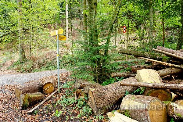 Holz (83816)