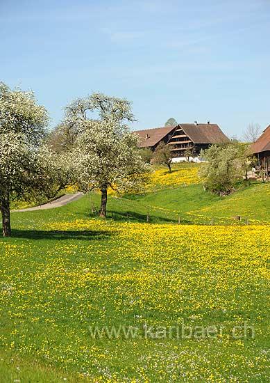 Blachen (103792)