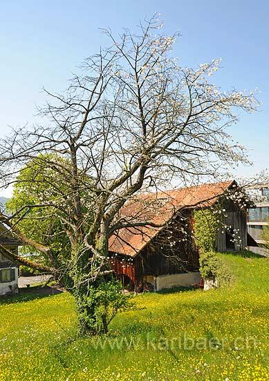 Walchwil (110835)
