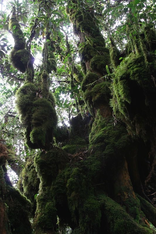 Mossy or Cloud forest