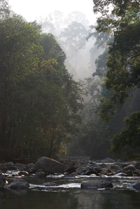 Selai River