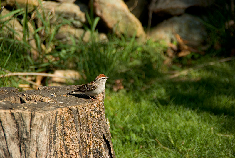 Sparrow at the Nature Center